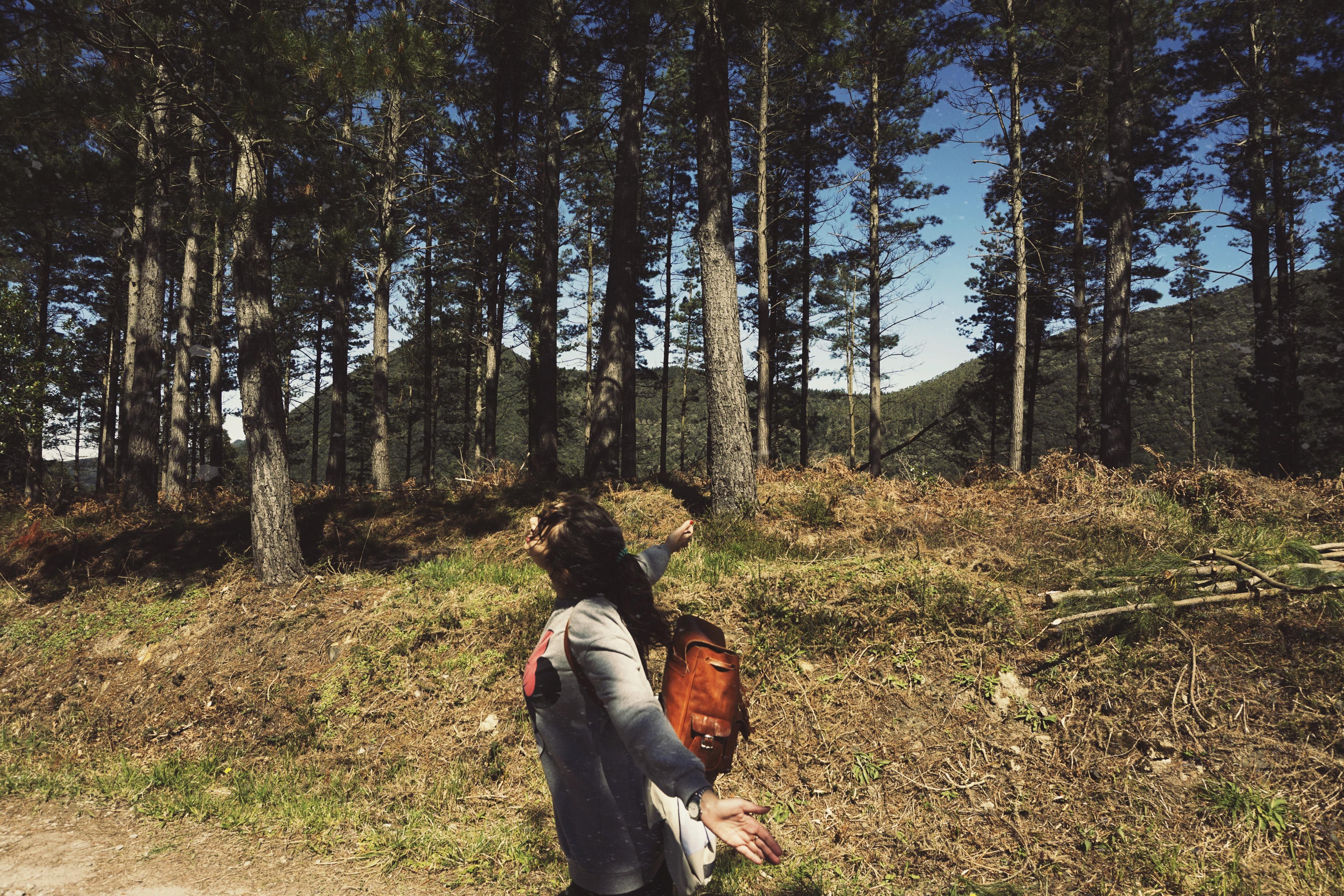 Bosque de Oma (País Vasco)